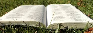 Bible in grass